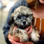 Tout ce qu'il faut savoir avant d'adopter un chien dans votre famille