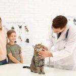 Animed Solutions : des conseils éducatifs pour le bien-être du chat et du chien