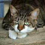 L'e-magazine des chats