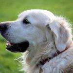 Un magazine en ligne dédié aux chiens