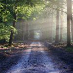 Réussir sa balade en forêt